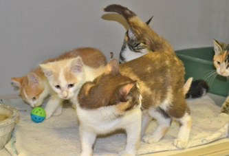 WCHS takes in more than 1,000 felines in midst of 'kitten season'