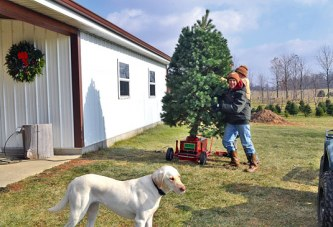 Family creates long traditions with rural Upper Sandusky pine tree farm
