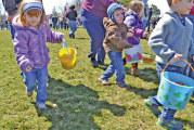 Egg gathering