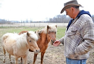 Humane Society calls attention to needs of horses on Help a Horse Day