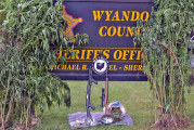 Marijuana eradication nets 54 pot plants across county