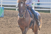 Horse show results 2015