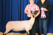 Wyandot County Junior Fair livestock sale