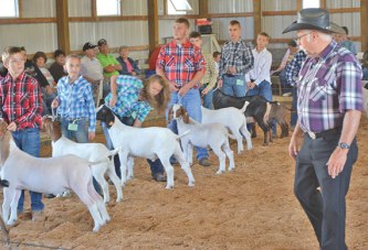 Goat results at the fair