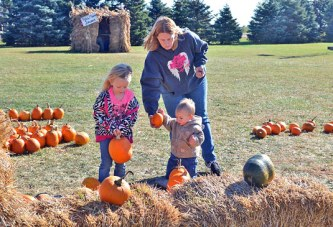 Choosing pumpkins