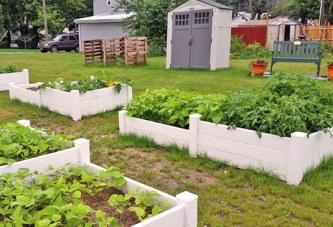Community garden in the running for grant through online fundraiser