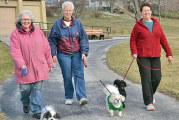 Dog walk city