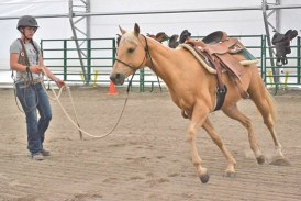 New indoor arena provides extra benefits for equine rescue