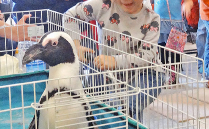 Penguin at the library