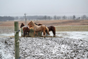 Humane society: Care essential for pets and livestock in winter