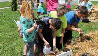 Community garden planting