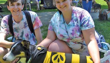 Pawz-bumble bee dog