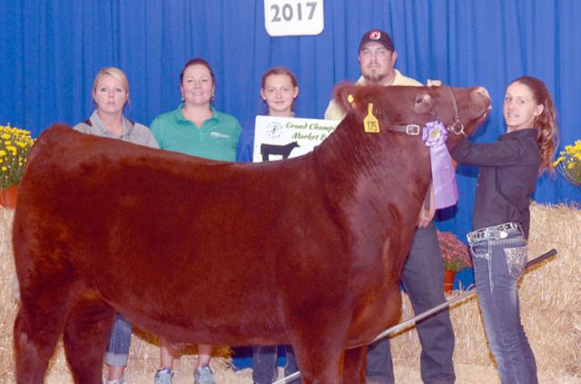 Grand champion market beef steer