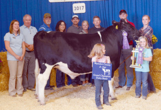 Grand champion market dairy steer