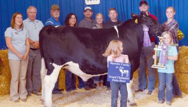 Grand champion market dairy steer