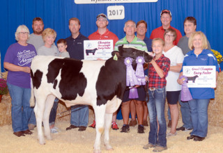 Grand Champion dairy feeder