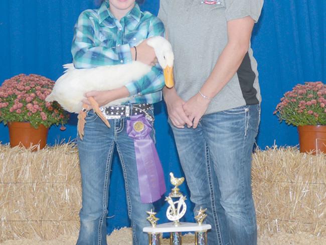 Grand champion market duck